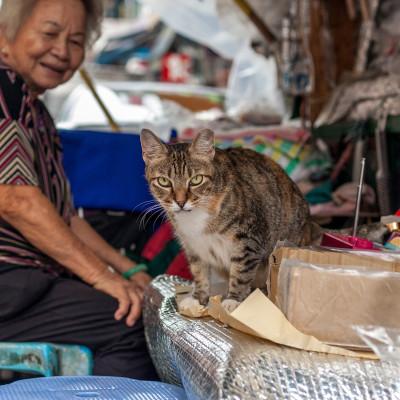 貓店長  Meow故事