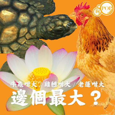 牛龜咁大、雞乸咁大、老蓮咁大,邊個最大?