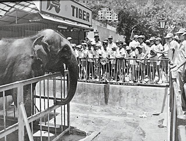 Tino_(elephant)